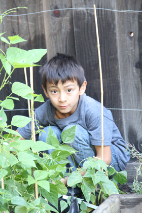 Marco has become a cash crop farmer at home, maintaining our garden and charging me for harvested crops. At school, instead of participating in his school science project, he plays at recess. Is he a slacker?